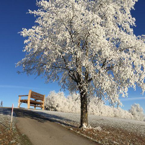 Wanderbank Allgäu im Winter  - © Theo Haslach , Kur- und Tourismusbüro Oy-Mittelberg