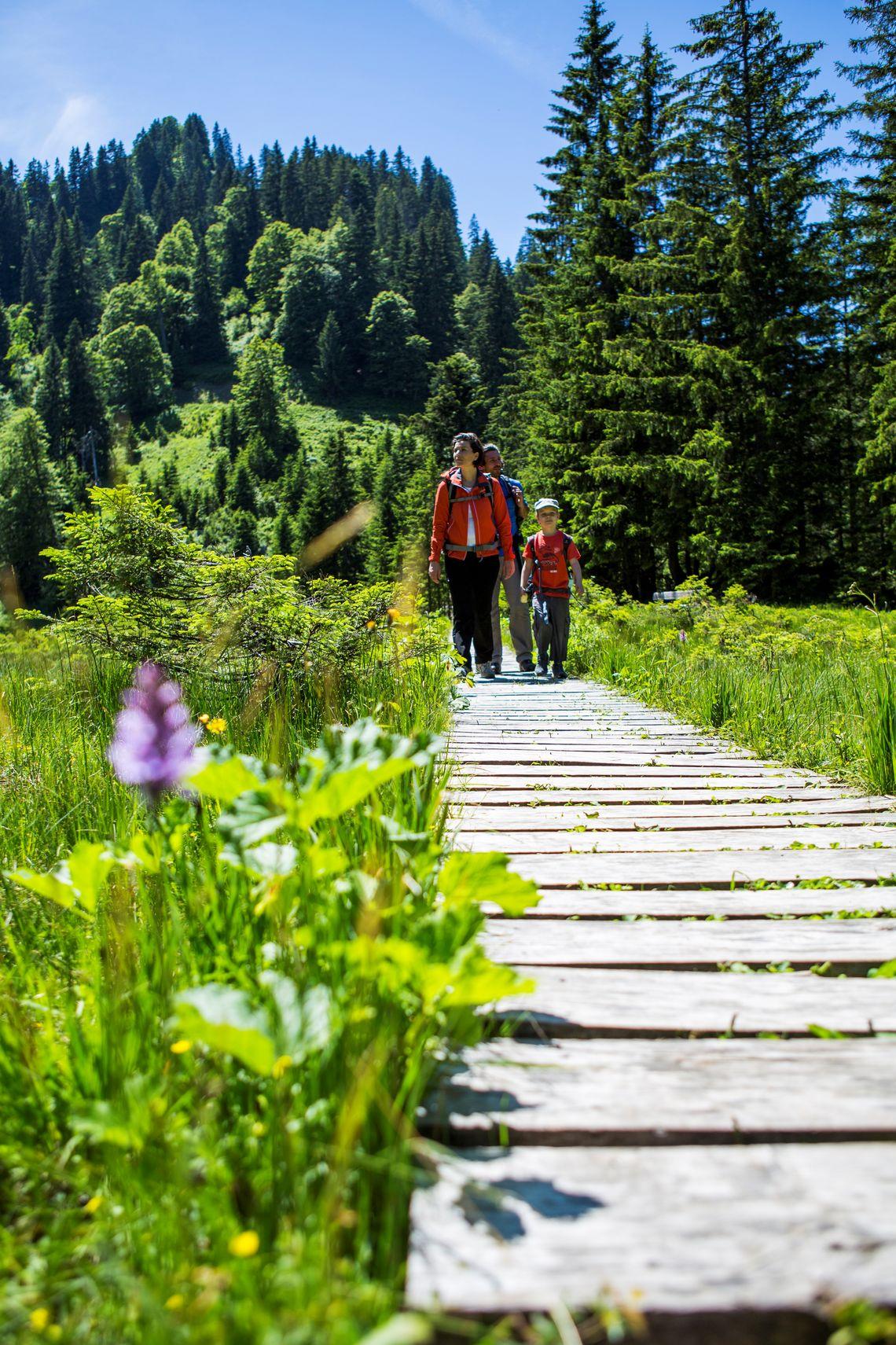 Auf dem Steg durchs Hühnermoosmoor  - © Oberstdorf / Kleinwalsertal Bergbahnen; Fotograf: Alex Savarino , Kur- und Tourismusbüro Oy-Mittelberg
