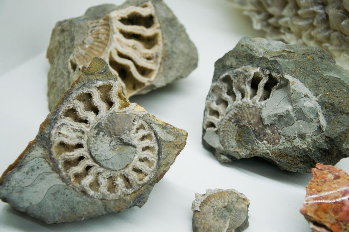 Ammoniten  - © Tobias Klöck , Kur- und Tourismusbüro