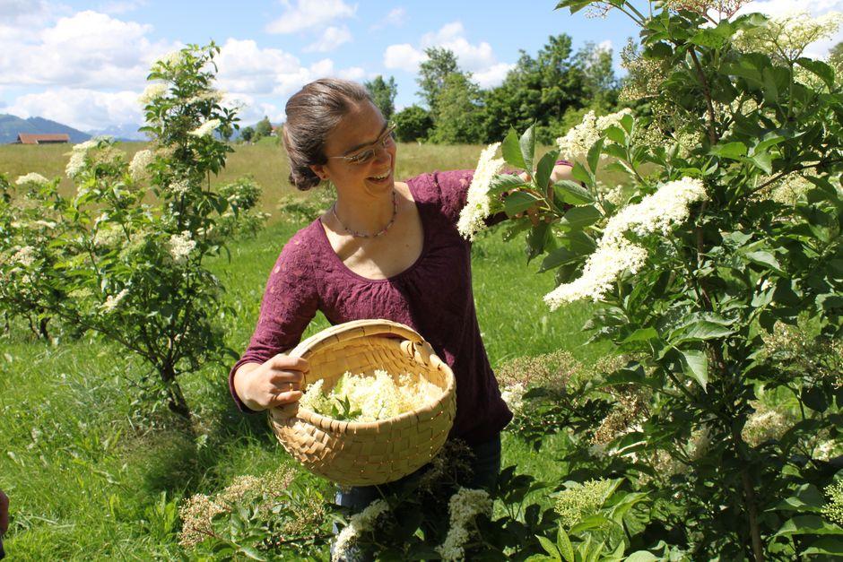 Blütenernte im Korb  - © Toska Maria Kühn , Kur- und Tourismusbüro Oy-Mittelberg